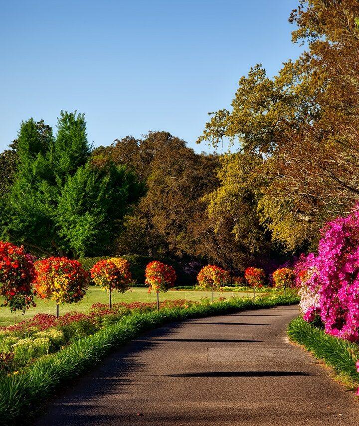 Na co zwrócić uwagę przy projektowaniu ogrodu?